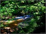 Trailside creek pc.jpg