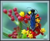 7/29/04c - Blue Bug 1