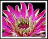 7/30/04 - Fleur de Jour