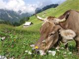 Klewenalp (Nidwalden)