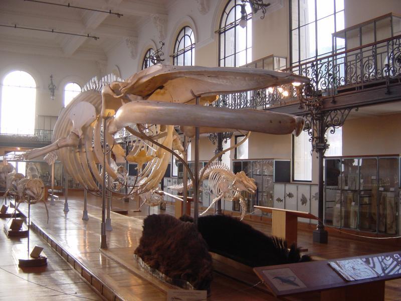 Skeleton of a Fish Dinosaur