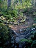 Cedar Butte Trail