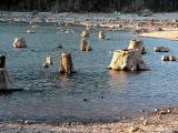 Rattlesnake Lake Stumps