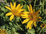Wildflower Pair