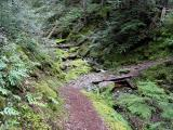 Thunder Creek Trail