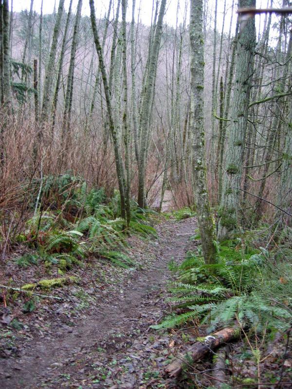 Klondike Swamp Trail