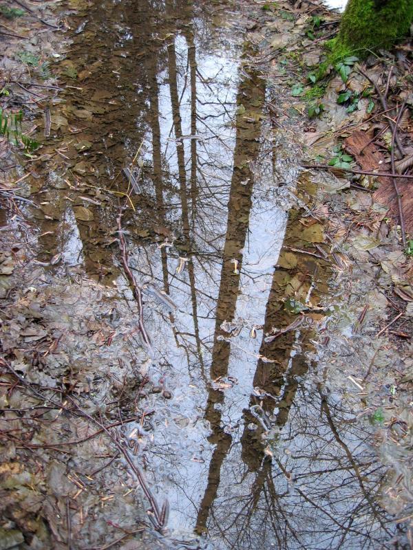 Puddle Reflection<br>East Fork Trail</br>