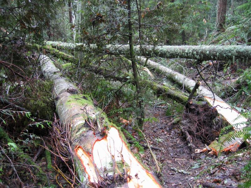Blowdown<br>De Leo Wall Trail</br>