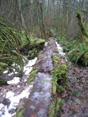 Log Bridge<br>Tibbetts Marsh Trail</br>