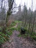 Coyote Creek Trail