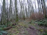 Lost Beagle Trail