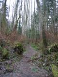 Tibbetts Marsh Trail