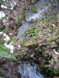 Creek Under Log BridgeTibbetts Marsh Trail