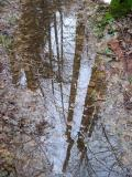 Puddle ReflectionEast Fork Trail