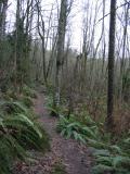 Shy Bear Trail