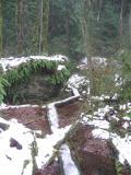 Log BoardwalkWilderness Creek Trail