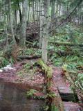 Log BridgeDeceiver Trail