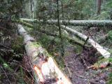 BlowdownDe Leo Wall Trail