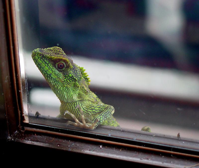 I hear ya knockin, but ya cant come in