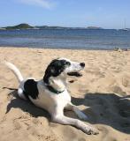 Joop's Dog Log - Sunday August 01