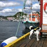 Joop's Dog Log - Monday August 02