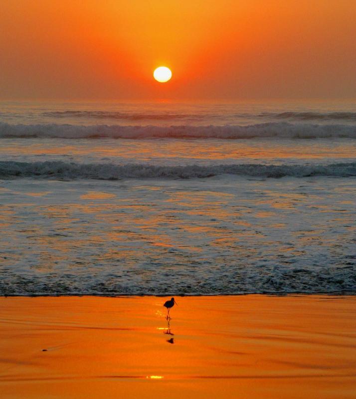 IMG_2091 beach.jpg