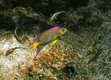 Purty Fish