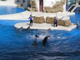 Dolphins in the Key West Dolphin Stadium