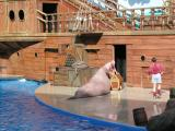 Clyde and Seamore Show - Walrus