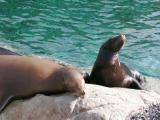 Seal and Sea Lion display