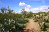 Picture Rocks, Tucson AZ