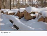 Frosty Nature - Febuary 28-05
