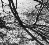 October shadows