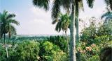 View from Hemingway's house