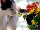 4986-6cats-cats.jpg