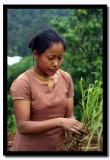 Lepcha Women with Seedlings, Pakang