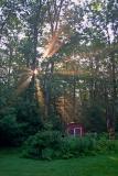 Woods Sunrise