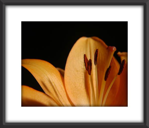 Flower_3281.jpg