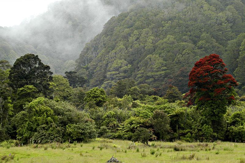 Valleys, Bush and Rata