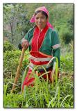 Silver Palaung Woman - in the field