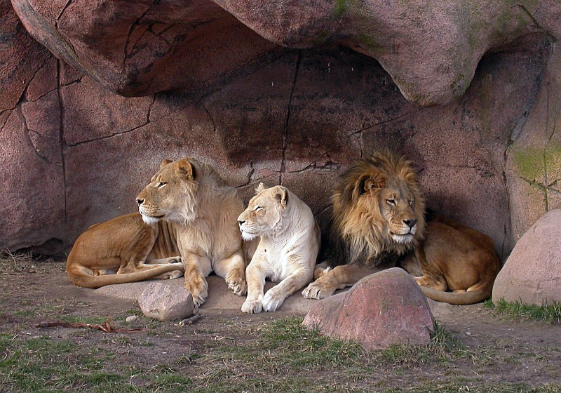 Lion Den.jpg