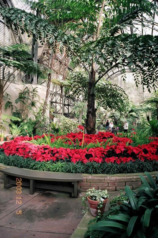 Inside Botanical garden.jpg