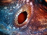 eye of a clam - split bommie 231203