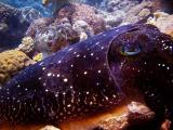 I am a cuttlefish and so is my friend - wicked 231203