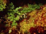 scorpion fish - sand box 211203