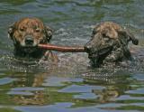 dog_swim061703done.jpg