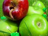 One Bad Apple Spoils the Whole Bunch by Cheryl Meisel