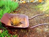 Old Rusty by golfers2424