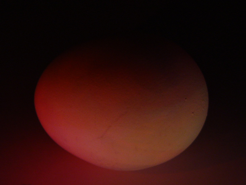 <p align=center><b> Red Planet </b> <br> <font size=1> by Helen Betts</font></p></br>10th Place