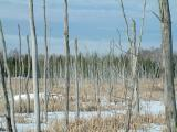 2003_1228_Winter Marsh